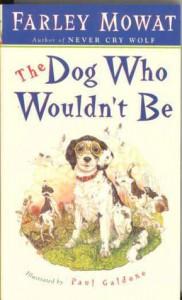 dog who